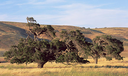 Photo of Tejon Ranch